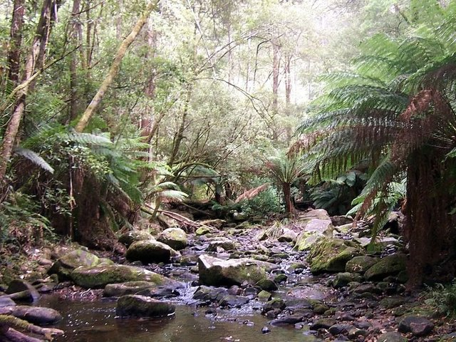 Erskine River in the Otways