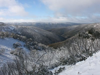 View to Mt Hotham
