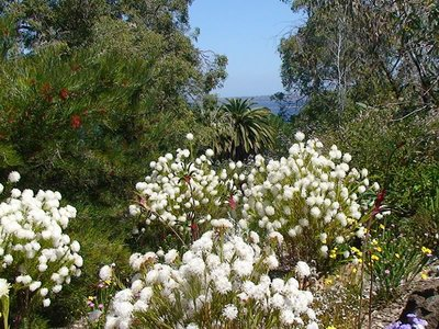Kings Park wildflowers