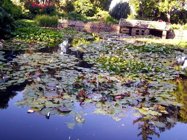 Lily Pond, Royal Tasmanian Botanical Gardens