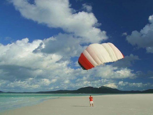 Kite on Whitehaven Beach