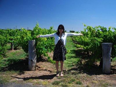 Coonawarra Vines