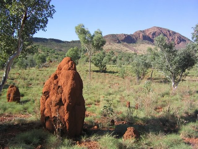 Termite Mound, Purnululu National Park
